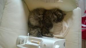 Il est pas mignon le chat de ma môman ?